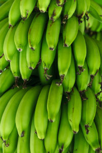 Green bananas and resistant starch