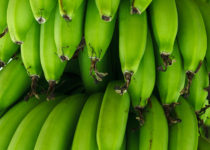 Green bananas are rich in resistant starch