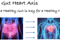 The Gut Heart Axis